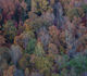beautiful fall colors as seen from the Gorge Scenic Drive